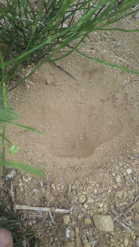 蟻地獄の巣(^O^)