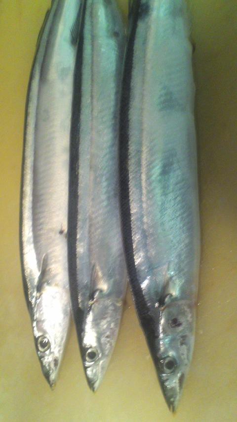 超高級魚(*^o^*)