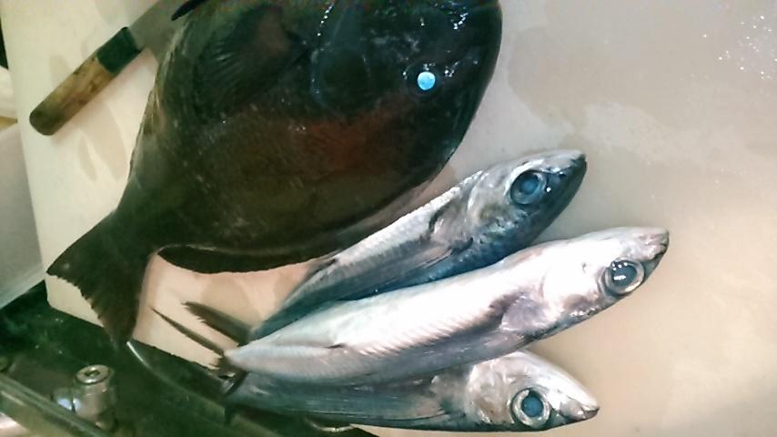 飛び魚(^^)