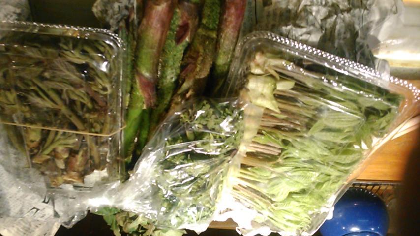 山菜\(^-^)/
