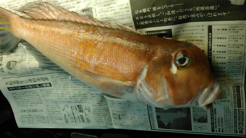 大矢さんやりました~(^^)51センチ甘鯛でーすo(^o^)o